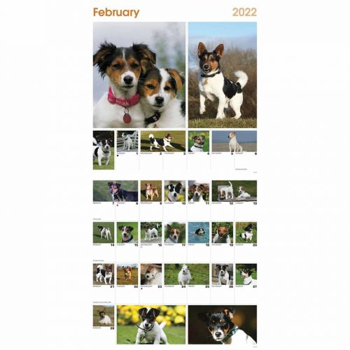 365 Days Of Jack Russell Terriers Calendar 2022-inside