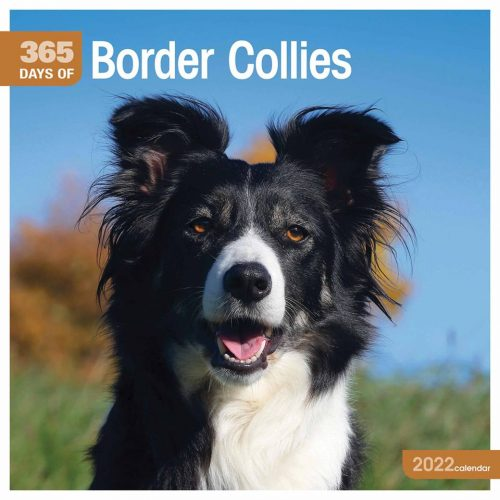 365 Days of Border Collies Calendar 2022-front