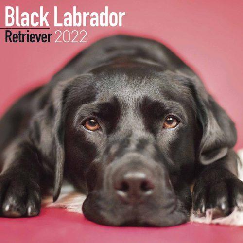 Black Labrador Retriever Calendar 2022-front