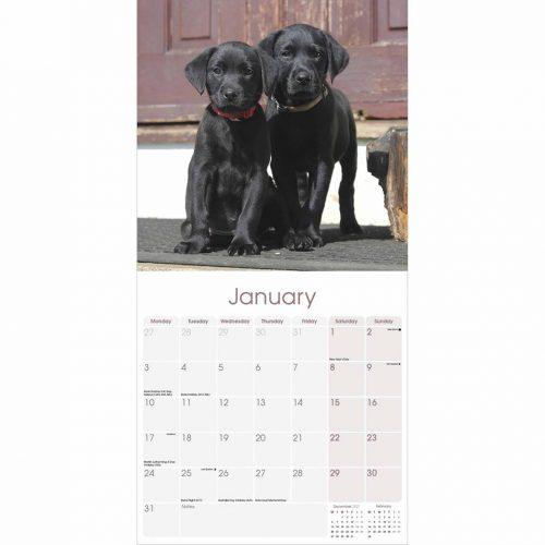 Black Labrador Retriever Calendar 2022-inside