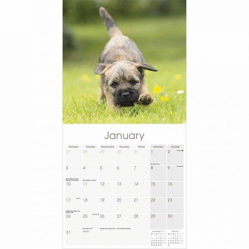 Border Terrier Calendar 2022-inside