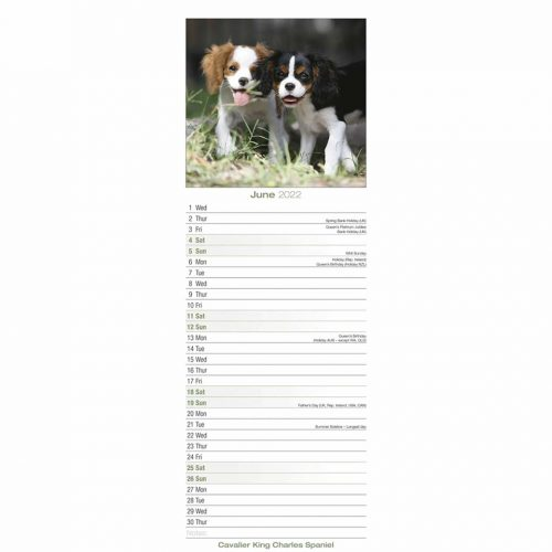Cavalier King Charles Spaniel Slim Calendar 2022-inside