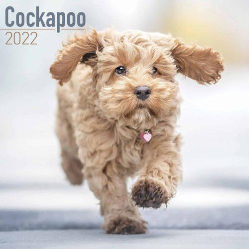 Cockapoo Calendar 2022-front