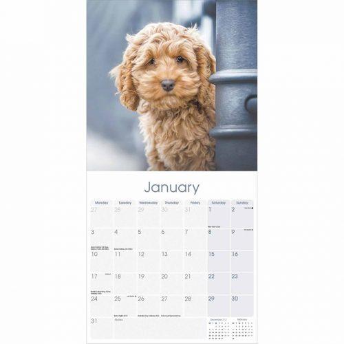 Cockapoo Calendar 2022-inside