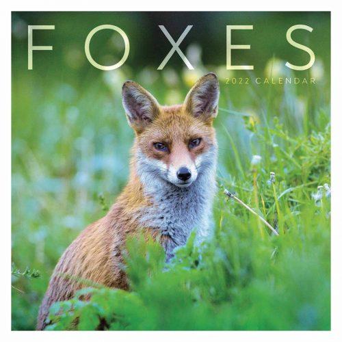 Foxes Calendar 2022-front