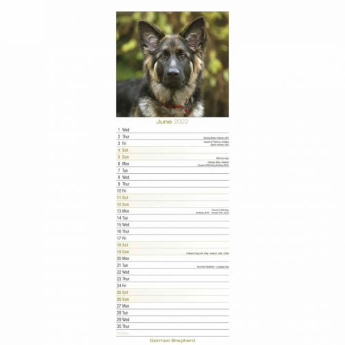 German Shepherd Slim Calendar 2022-inside