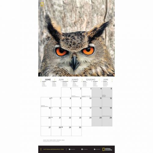 National Geographic Owls Calendar 2022-inside