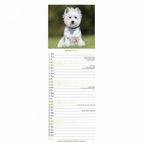 West Highland White Terrier Slim Calendar 2022-inside
