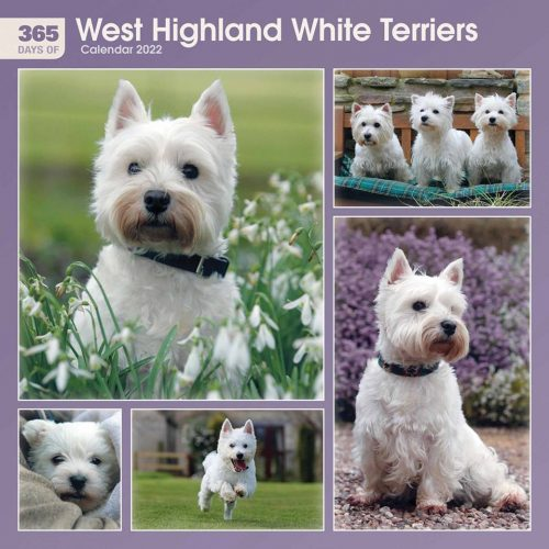 West Highland White Terriers 365 Days Calendar 2022-front