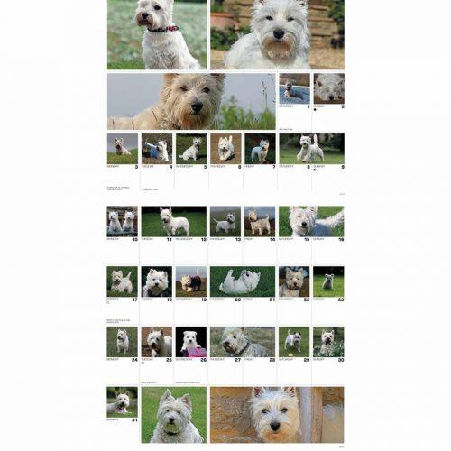 West Highland White Terriers 365 Days Calendar 2022-inside